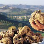 Truffles in Italy – White Alba Truffles & Italian Black Truffles