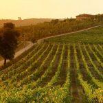15 Best Italian Vineyards to Visit